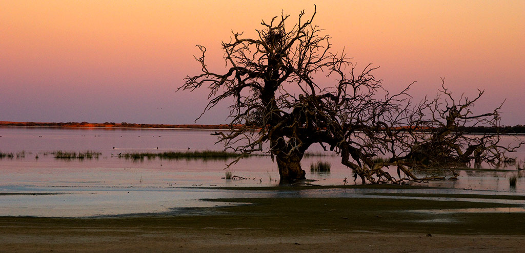 A drowned tree at the edge of the lake with a number of large bird nests in its upper branches. The red dunes can be seen on the opposite side of the lake. The sky is bright pink from the setting sun