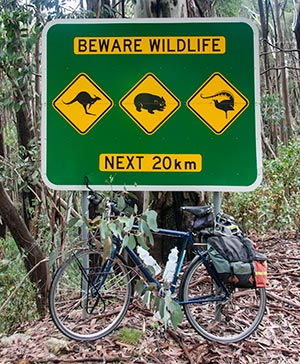 A road sign warning road users of the possibility of encountering kangaroos, wombats and lyrebirds in the next 20km