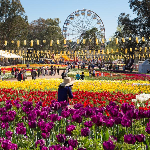 People walking among the large garden beds of tulips which are spread either side of Floriade's main 'avenue'. A ferris wheel is in the background. Colours include purple, red, pink, white, yellow and green.
