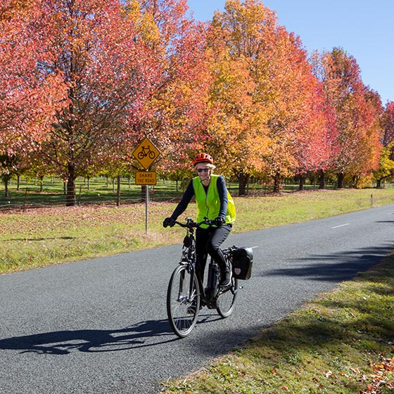 "A female cyclist on a Mulga Tours hire bike passes in front of Manchurian Pear trees in their full red/yellow and gold autumn colours. A road sign behind the cyclist says ""Share the Road"""