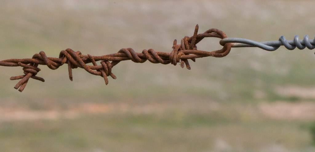 Rusty barbed wire knot with new wire