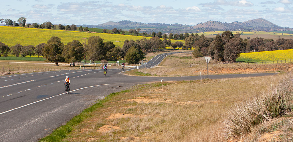 Cyclists spread out along an otherwise empty road. Yellow canola fields either side of the road. Mount Bobbara with telecommunications tower in the background.